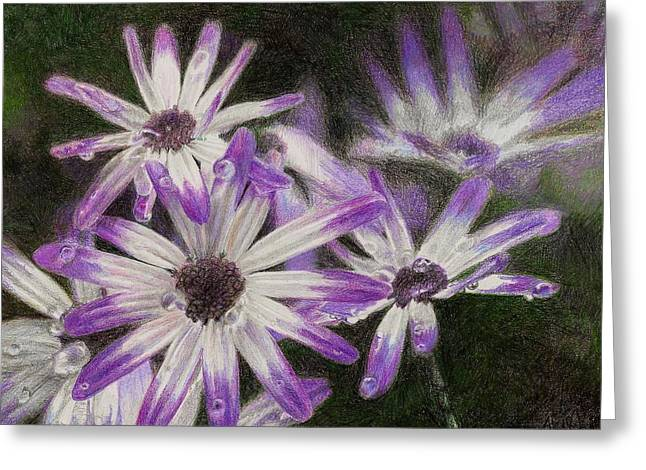 Senetti Pericallis Greeting Card by Steve Asbell
