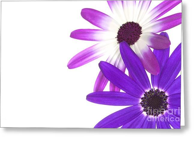 Senetti Greeting Cards - Senettis  Greeting Card by Richard Thomas