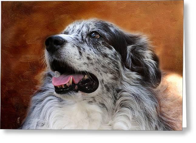 Australian Shepherd Greeting Cards - Senior Australian Shepherd Portrait Greeting Card by Jai Johnson