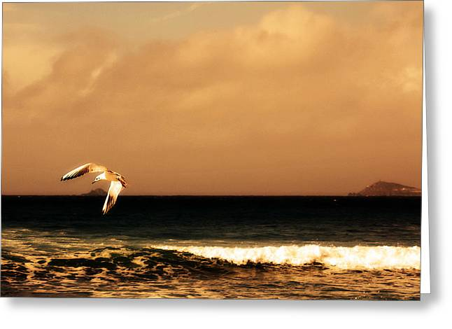 Sennen seagull Greeting Card by Linsey Williams