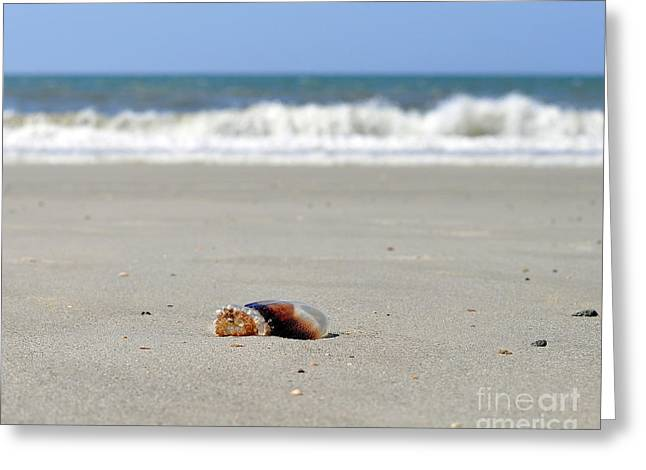 Jelly Fish Greeting Cards - Separation Anxiety Greeting Card by Al Powell Photography USA