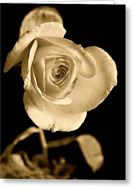 Flower Still Life Prints Photographs Greeting Cards - Sepia Antique Rose Greeting Card by M K  Miller