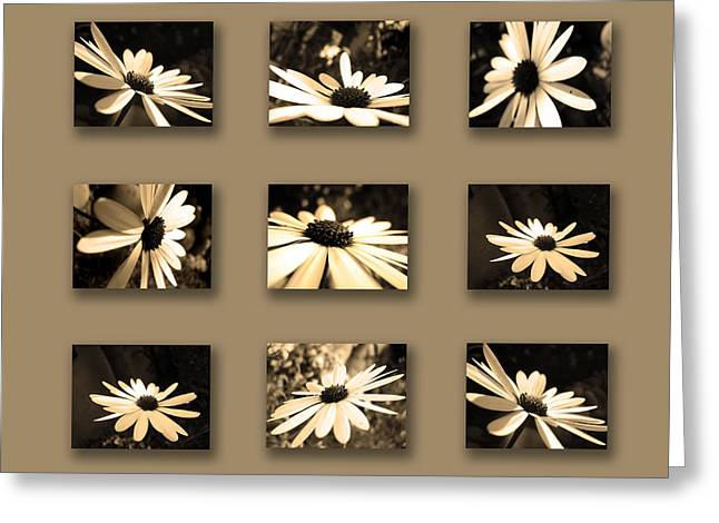 Sepia Daisy Flower Series Greeting Card by Sumit Mehndiratta