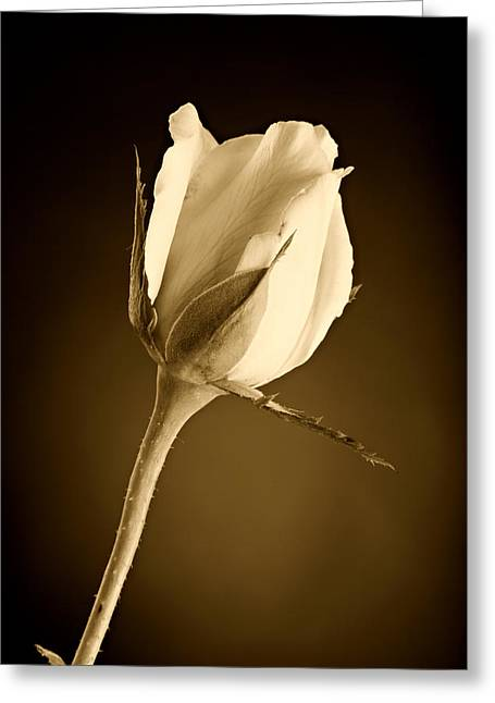 Flower Still Life Prints Photographs Greeting Cards - Sepia Rose Bud Greeting Card by M K  Miller