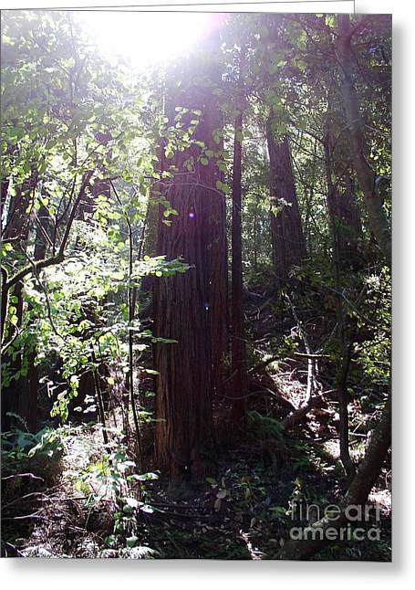 Suzanne Clark Greeting Cards - Sequoia Light Greeting Card by Suzanne Clark