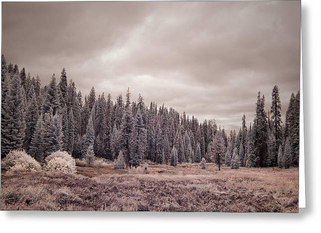 Ir Photography Greeting Cards - Sequoia Greeting Card by Mike Irwin