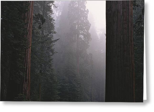 Sequoia Trees Dwarf A Car Traveling Greeting Card by Carsten Peter