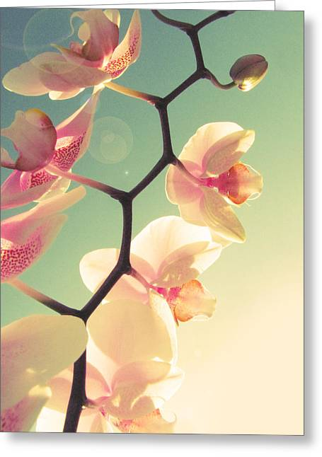 Macro Floral Photos Greeting Cards - Serenade Greeting Card by Amy Tyler