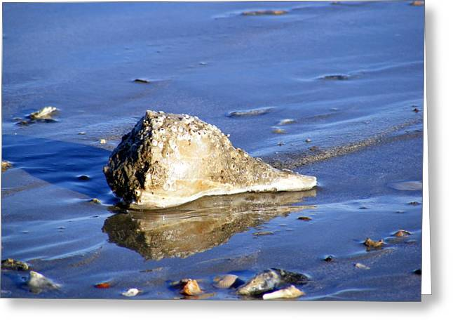 Conch Greeting Cards - Serene Conch Shell at Isle of Palms Greeting Card by Elena Tudor