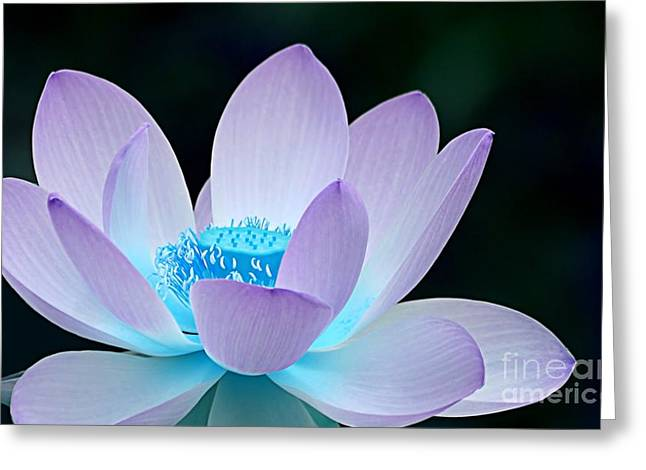 Flower Greeting Cards - Serene Greeting Card by Photodream Art