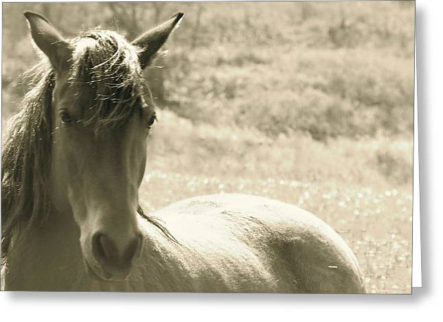 Wild Horse Pyrography Greeting Cards - Serene Greeting Card by Tess  Marie
