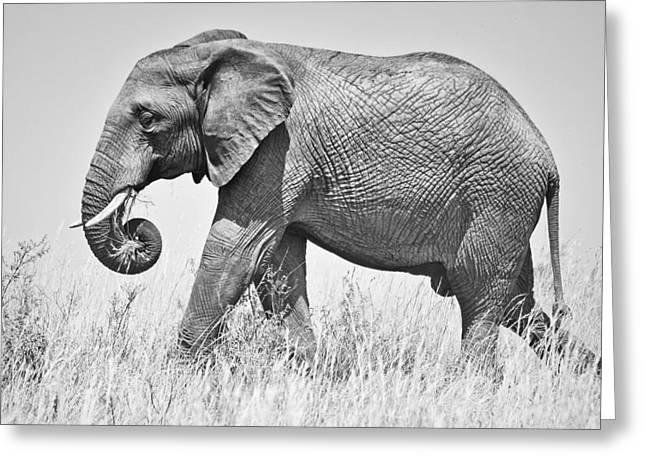 Serengeti Wildlife Greeting Cards - Serengeti Elephant Greeting Card by Richard Matthews