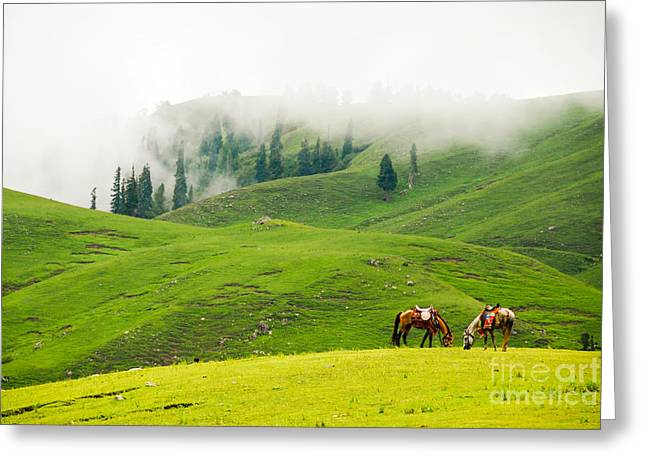 Paradise Meadow Greeting Cards - Serenity Greeting Card by Syed Aqueel