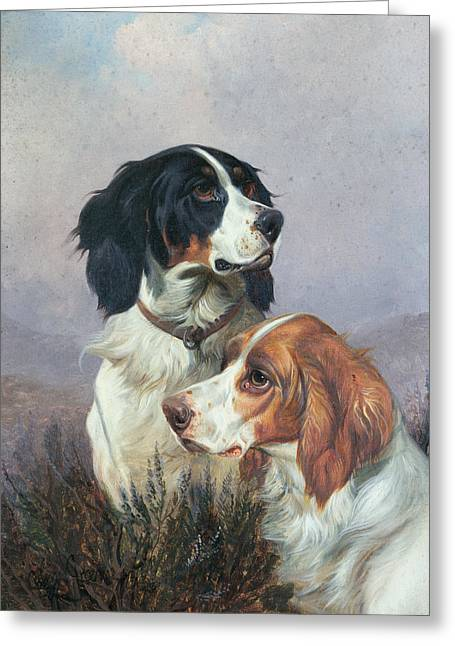 Best Friend Greeting Cards - Setters on a Moor Greeting Card by Colin Graeme