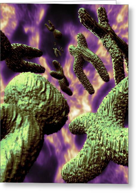 Duplicate Greeting Cards - Sex Chromosomes Greeting Card by Coneyl Jay