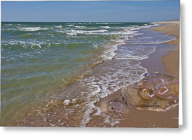Jelly Fish Digital Art Greeting Cards - Shackleford Beach Jelly Greeting Card by Betsy C Knapp