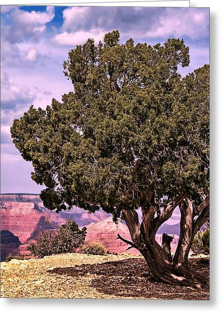 The Grand Canyon Greeting Cards - Shade Greeting Card by Tom Prendergast