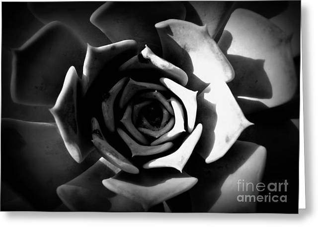 Shawna Gibson Greeting Cards - Shades of Gray III Greeting Card by Shawna Gibson