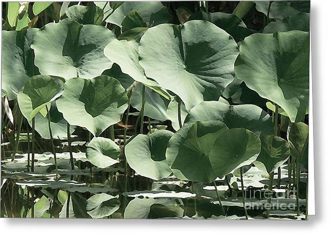 Lotus Flower Greeting Cards - Shades Of Green Greeting Card by Robert Hooper