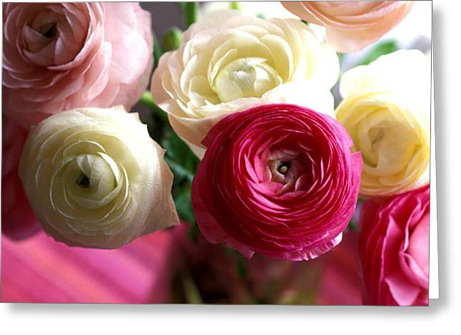 Shades of Pink Greeting Card by Kathy Yates