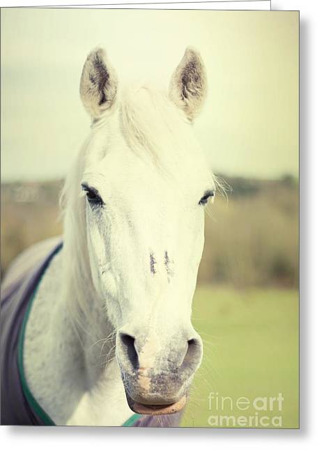 Shadowfax Greeting Card by Violet Gray