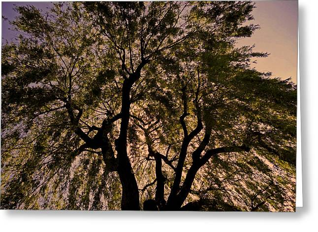 Oberpfalz Greeting Cards - Shady Tree ... Greeting Card by Juergen Weiss