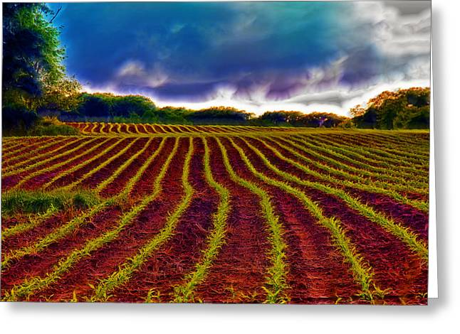 New Melle Greeting Cards - Shagadelic Crop Lines Greeting Card by Bill Tiepelman