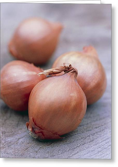 Quartet Greeting Cards - Shallots Greeting Card by Maxine Adcock