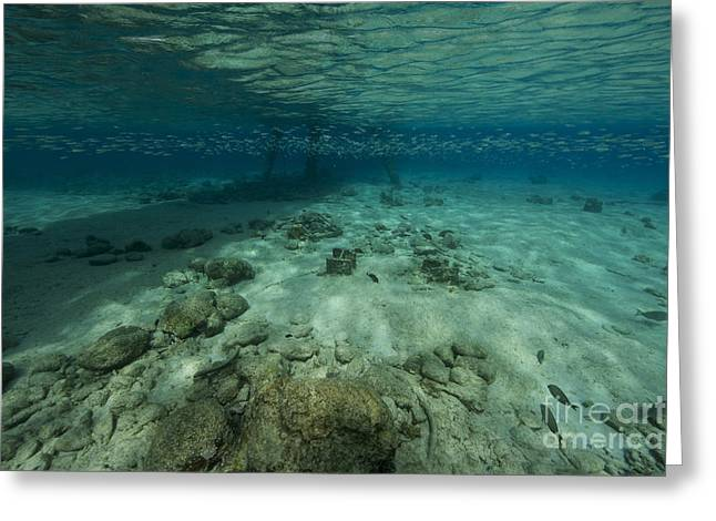 Baitfish Greeting Cards - Shallow Waters Under Salt Pier Greeting Card by Terry Moore