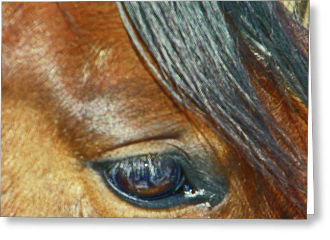 Expressionist Equine Greeting Cards - Shana Greeting Card by Lenore Senior