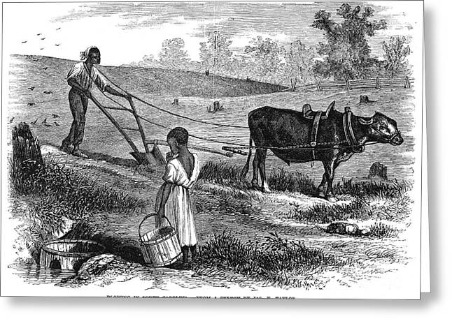 Sharecropper Greeting Cards - Sharecropper, 1866 Greeting Card by Granger