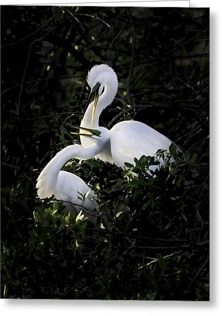 Roost Photographs Greeting Cards - Sharing a Moment Greeting Card by Rob Travis