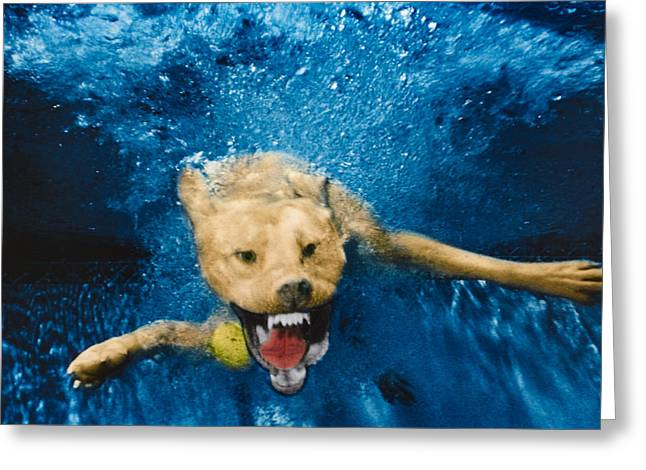 Underwater Dog Greeting Cards - Shark Attack Greeting Card by Jill Reger