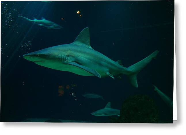 Preditor Photographs Greeting Cards - Shark Greeting Card by Jeff  Swan