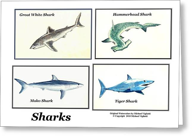 Mako Greeting Cards - Sharks Collage Greeting Card by Michael Vigliotti