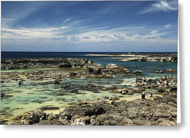Sharks Cove Greeting Cards - Sharks Cove Greeting Card by Vince Cavataio - Printscapes