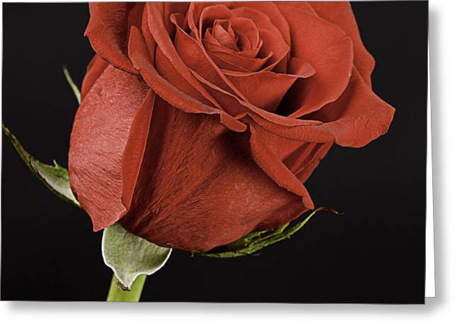 Sharp Red Rose On Black Greeting Card by M K  Miller