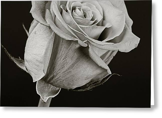 Sharp Rose Black and White Greeting Card by M K  Miller
