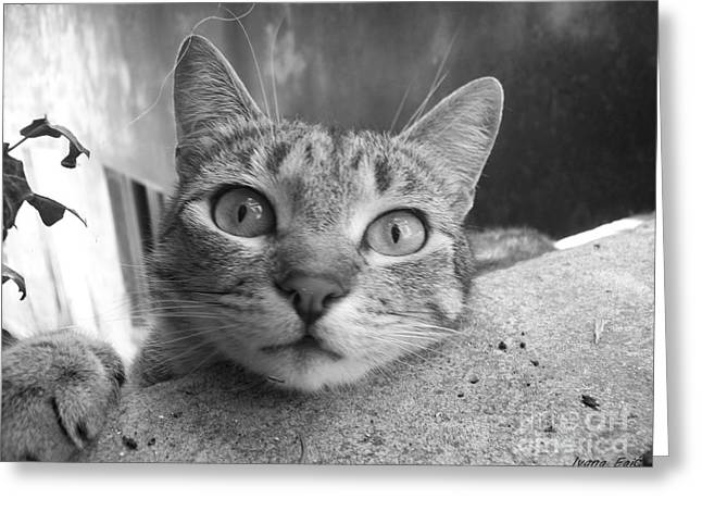 Photos Of Cats Greeting Cards - She Knows How Greeting Card by Ivana  Egic