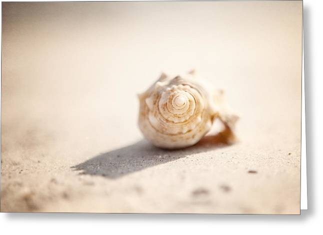 Sea Shell Art Greeting Cards - She Sells Sea Shells Greeting Card by Lisa Russo