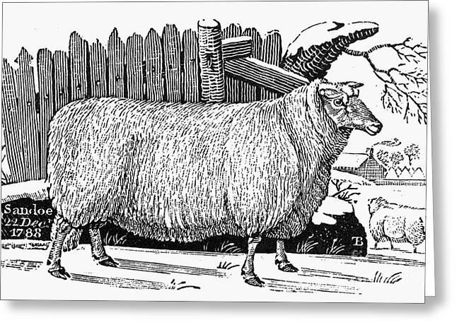 SHEEP, 1788 Greeting Card by Granger