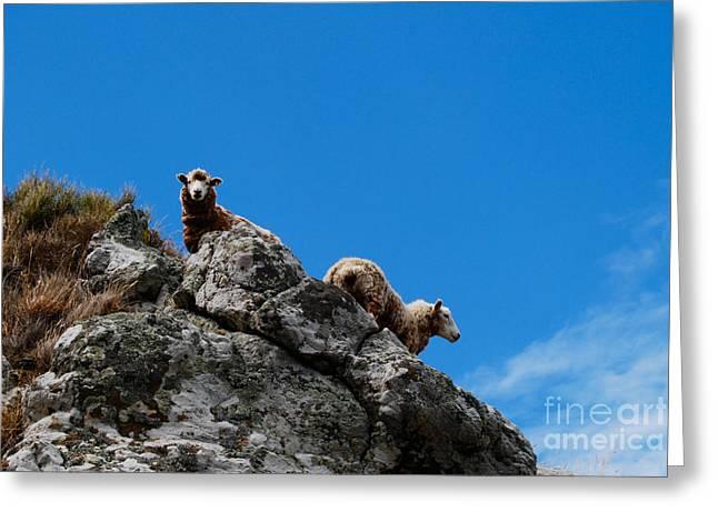 Thin Greeting Cards - Sheep 2 Greeting Card by Cesar Marino