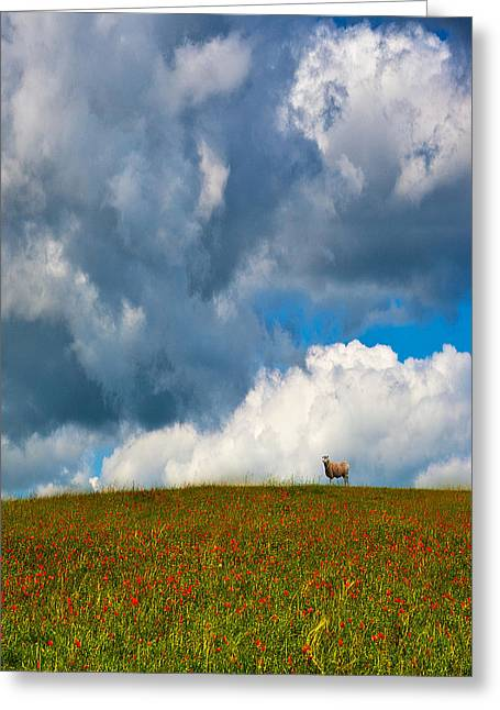 Field. Cloud Greeting Cards - Sheep and Poppies Greeting Card by Kris Dutson