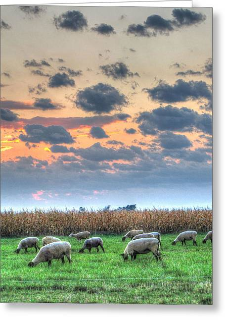 Farm Animals Pastels Greeting Cards - Sheep At Sunset Greeting Card by Jackie Novak