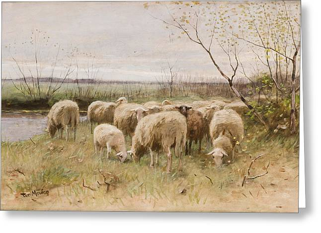 Flock Greeting Cards - Sheep Greeting Card by Francois Pieter ter Meulen
