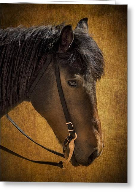 Zoology Greeting Cards - Sheep Herding Horse Portrait Greeting Card by Susan Candelario