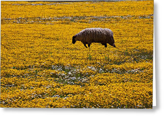 Sheep In Meadow Of Golden Flowers Greeting Card by Garry Gay