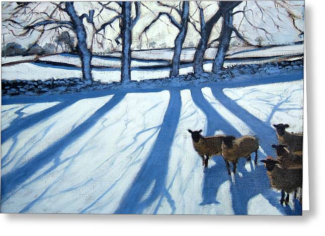 Blue Shadows Greeting Cards - Sheep in snow Greeting Card by Andrew Macara