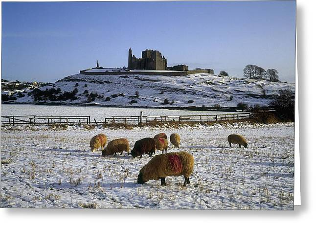 Collection Of Rocks Greeting Cards - Sheep On A Snow Covered Landscape In Greeting Card by The Irish Image Collection