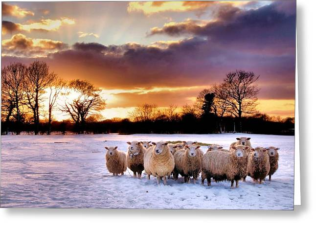 Sheepish Greeting Card by Jeremy Sage